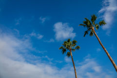Tropical palmtrees Royalty Free Stock Photo