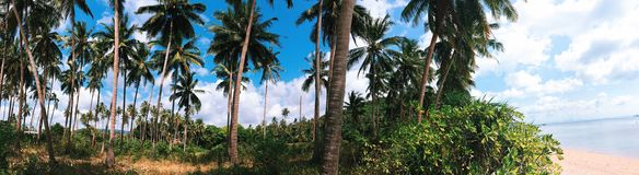 Tropical panorama. Panorama of a tropical paradise with palm trees and a beach. Koh Samui, Thailand. A Stock Photo
