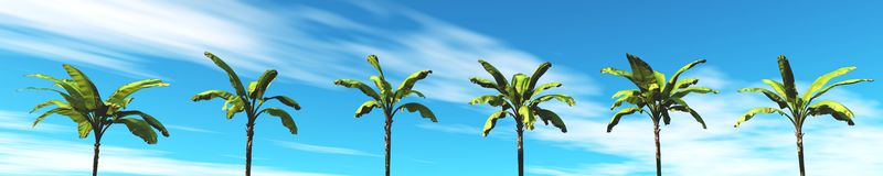 Tropical panorama, the sunset and palm trees Stock Photos