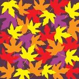 Tropical papaya leaf background Royalty Free Stock Photography