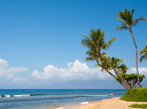 Tropical paradise. Palm trees against blue sky with sand and ocean in Maui, Hawaii with copy space Royalty Free Stock Image