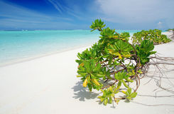 Tropical paradise Stock Image