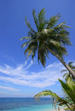 Tropical Paradise. Palm trees by the beach on a beautiful sunny day stock photos