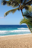 Tropical Paradise. On Oahu's North Shore, discover the beautiful Banzai Pipeline.  Sand, sun, and ocean under the shade of a coconut tree Stock Photo