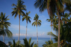 Tropical Paradise. Tropical scenic with palm trees, blue sky and ocean Royalty Free Stock Photo