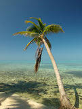 Tropical Paradise. Palm and the calm before the storm - North East Caye (Glover's Atoll Resort), Belize. The barrier reef is the second longest in the world and Royalty Free Stock Photo