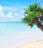 Tropical paradise with azure waters and palm Stock Photos