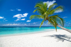 Tropical paradise beach background. Tropical paradise beach with white sand and coco palms travel tourism background concept Royalty Free Stock Photo