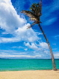 Tropical paradise beach. Blue water, palm tree Stock Images