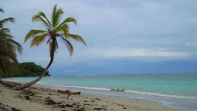 Tropical Beach And Palm Tree. Tropical Paradise Beach And Palm Tree stock video footage