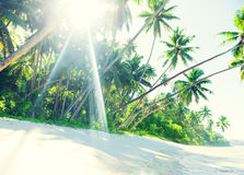 Tropical Paradise Beach with Palm Tree.  Royalty Free Stock Photos