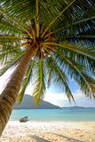 Tropical Paradise Beach with Palm Tree. A lone palm on a deserted tropical island Royalty Free Stock Image