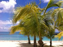Tropical Paradise. Tropical beach scene with palm trees, sandy beach and blue ocean royalty free stock images