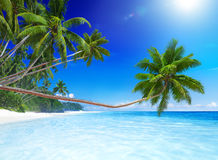 Tropical Paradise Beach Summer Vacation Concept Royalty Free Stock Photography