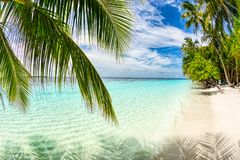 Tropical paradise beach white sand and coco palms travel tourism background concept stock photo