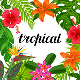 Tropical paradise card with stylized leaves and flowers.  Stock Photo