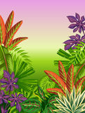 Tropical paradise card with stylized plants and leaves.  Royalty Free Stock Photo