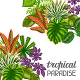 Tropical paradise card with stylized plants and leaves. Image for advertising booklets, banners, flayers Royalty Free Stock Photography