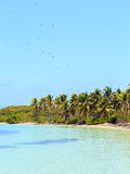 Tropical paradise. On Contoy Island National Park, Mexico Royalty Free Stock Photography