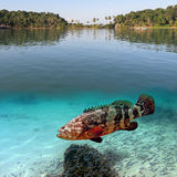 Tropical paradise and giant grouper Stock Image