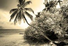 Tropical paradise island. Paradise of Maldives - tropical island Hudhuranfushi Royalty Free Stock Photos