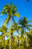 Tropical paradise on the island of Frades in the Bay of All Sain Royalty Free Stock Image