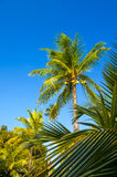 Tropical paradise on the island of Frades Royalty Free Stock Photo