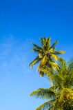Tropical paradise on the island of Frades Stock Photos