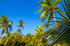 Tropical paradise on the island of Frades Royalty Free Stock Photos