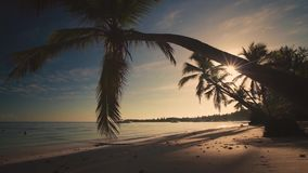Tropical paradise island view of beach with yachts and palms , seen from under the palm trees, sunrise scenery, morning