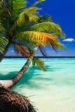 Tropical Paradise at Maldives stock photos