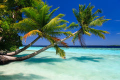 Tropical Paradise at Maldives Royalty Free Stock Images