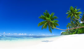 Tropical Paradise nature outdoors concept Royalty Free Stock Photography
