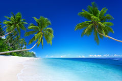 Tropical paradise outdoors nature concept Royalty Free Stock Images