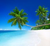 Tropical Paradise with Palm Tree.  Royalty Free Stock Images