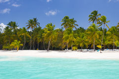 Tropical paradise with palm trees. At blue lagoon on caribbean wild beach, Saona Island, Dominican Republic Stock Photo