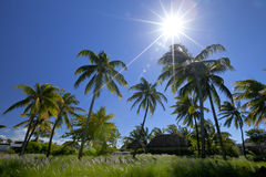 Tropical Paradise Royalty Free Stock Images