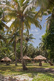Tropical paradise. Palm trees at Silver Sands beach Royalty Free Stock Photo