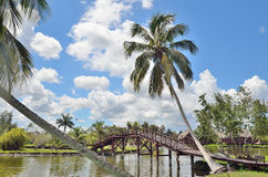 Tropical paradise with palms, bridge and water. Stock Photos