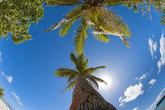 Tropical Paradise Polynesian lagoon Beach Stock Photo