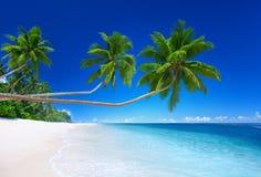 Tropical Paradise Summer Vacation Concept Stock Photos