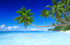 Tropical Paradise Summer Vacation Leisure Concept Stock Photos