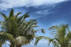 Tropical paradise, the tops of palm trees against the blue sky,. Background, texture, space for text Stock Images