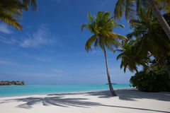 Tropical paradise vacation - palm trees, sand and ocean Royalty Free Stock Photography