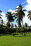 Tropical park. Royalty Free Stock Images