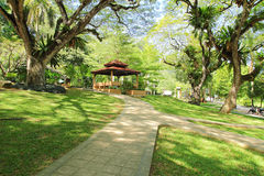Tropical Park Garden. Tropical botanic garden with huge tree cover the blue sky stock photography