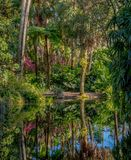 Tropical Park, in the frame of palm trees, flowering shrubs, the lake. Reflections in the water. stock photography