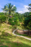 Tropical park landscape view. Stock Photo
