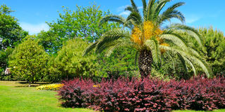 Tropical park with palm trees and flower beds Royalty Free Stock Photo