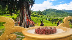 Tropical park with paths giant tree flower-bed in large vase. View of tropical tourist park with paths giant trees flower-bed in large vase against hills blue stock video footage
